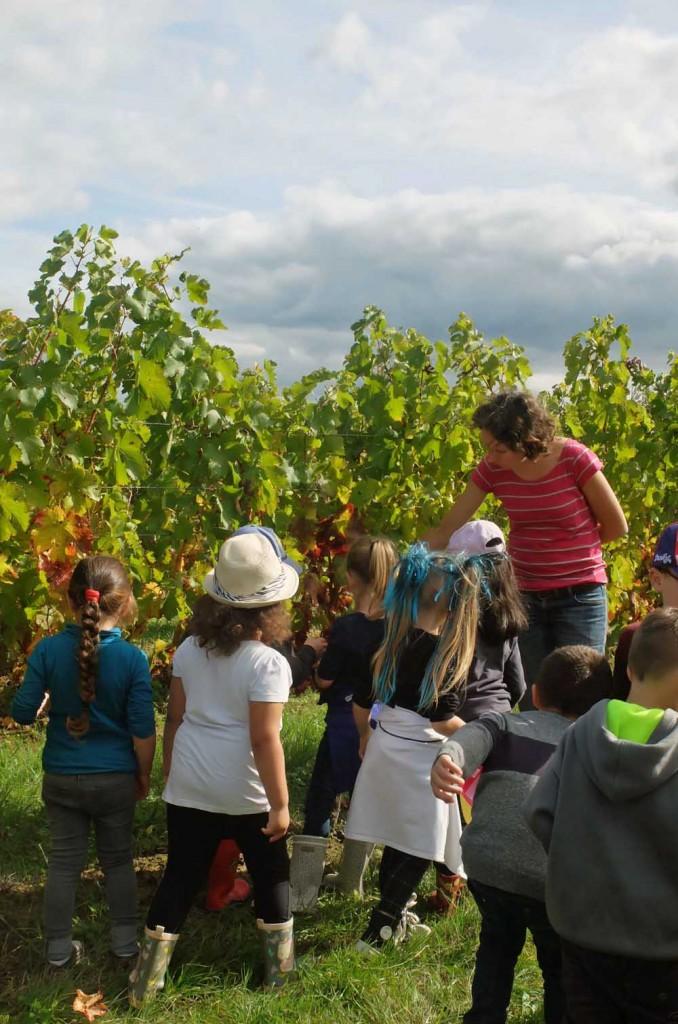 Ecoles en vendanges 2015 Domaine de Perreau Bergerac