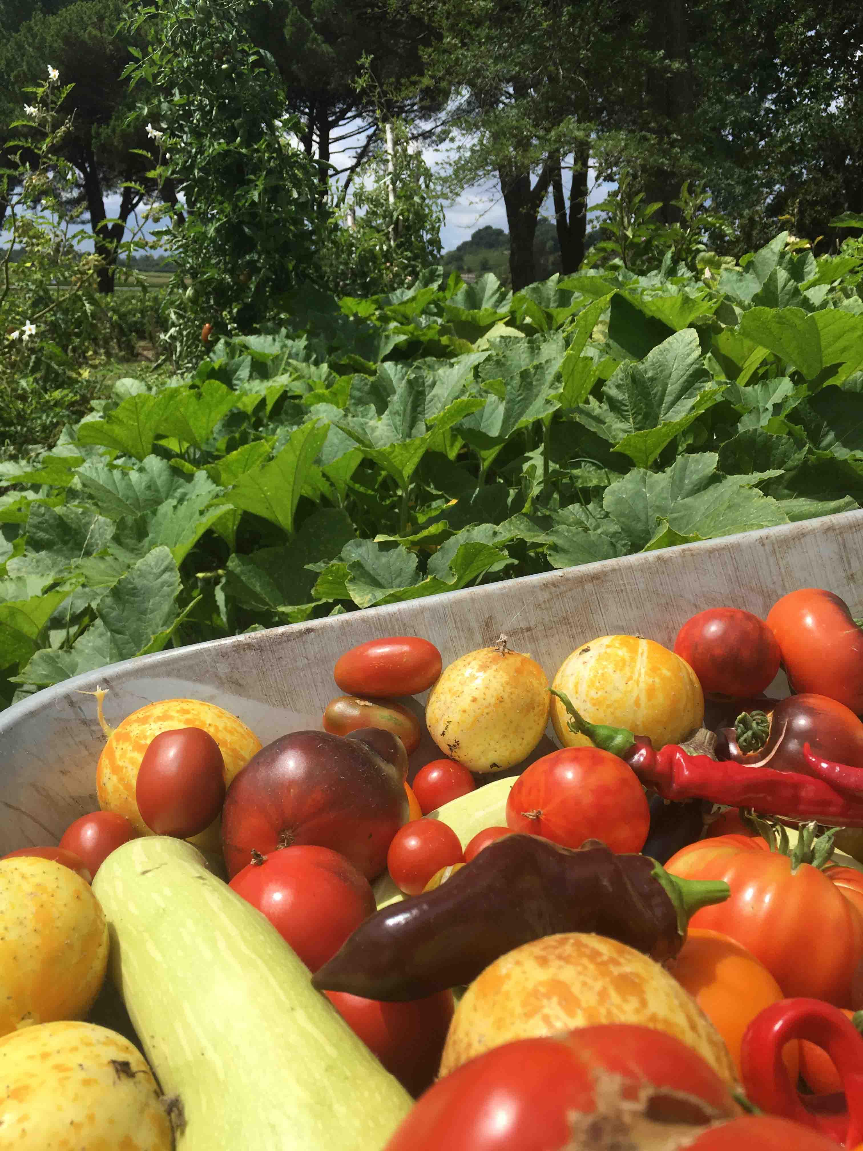 Oenotourisme côté jardin avec AKEBIA paysagiste jardin en permaculture légumes bio Château de la Dauphine Fronsac oenotourisme Green Tour Best of Wine Tourism